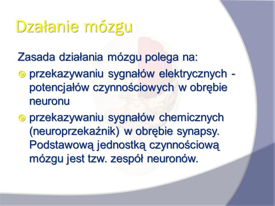 Dzałanie mózgu Zasada działania mózgu polega na: