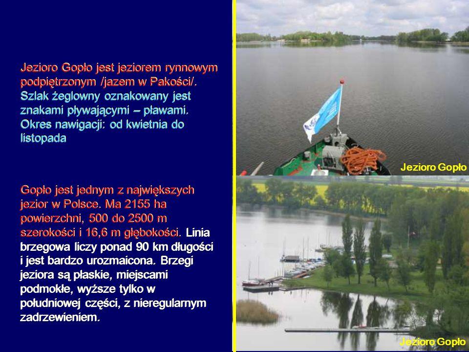 Jezioro Gopło jest jeziorem rynnowym podpiętrzonym /jazem w Pakości/