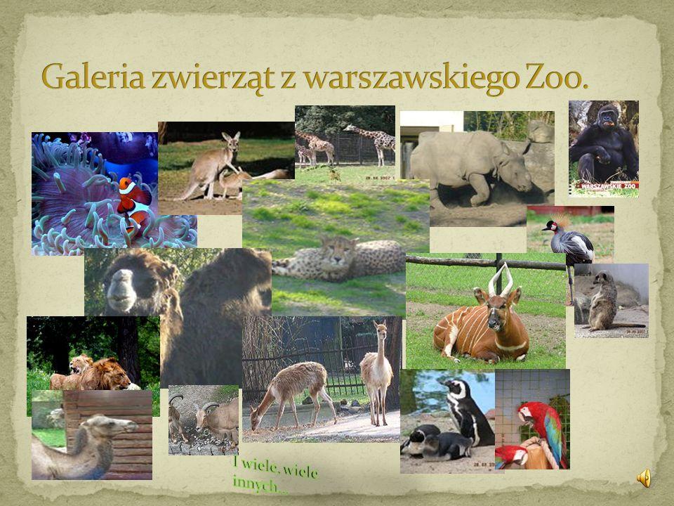 Galeria zwierząt z warszawskiego Zoo.