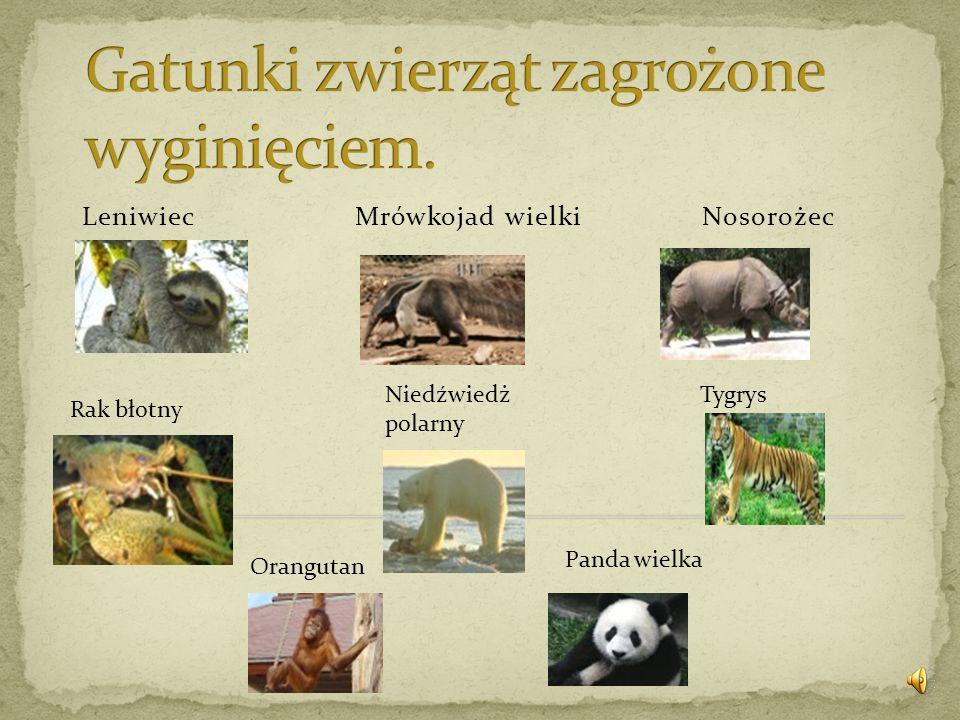 Gatunki zwierząt zagrożone wyginięciem.