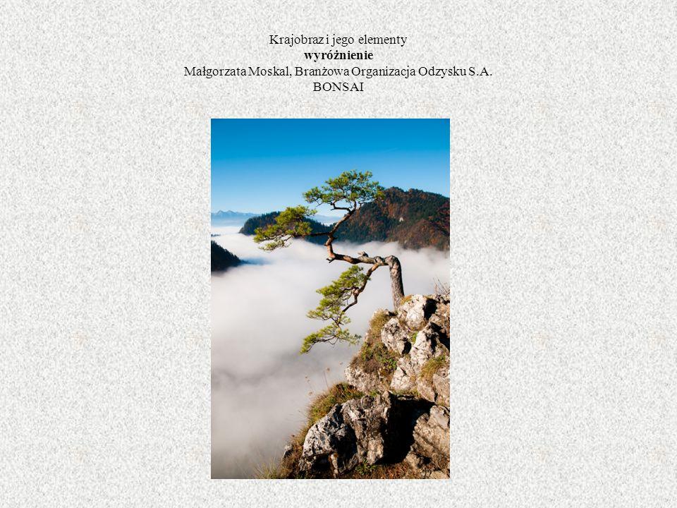Krajobraz i jego elementy wyróżnienie Małgorzata Moskal, Branżowa Organizacja Odzysku S.A. BONSAI