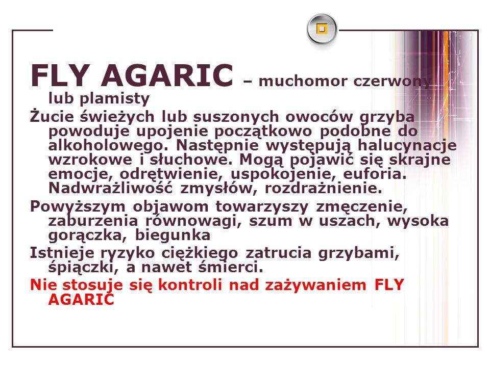 FLY AGARIC – muchomor czerwony lub plamisty