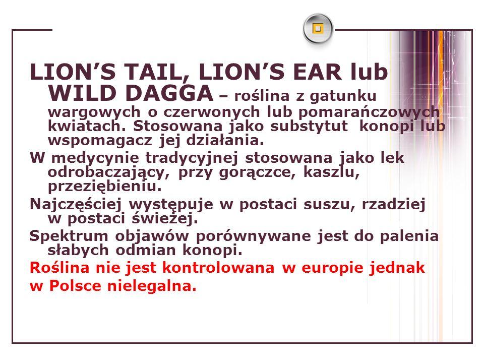 LION'S TAIL, LION'S EAR lub WILD DAGGA – roślina z gatunku wargowych o czerwonych lub pomarańczowych kwiatach. Stosowana jako substytut konopi lub wspomagacz jej działania.