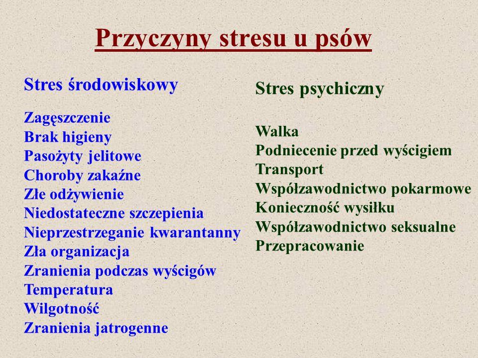 Przyczyny stresu u psów