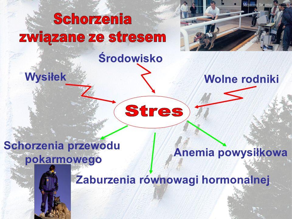 Schorzenia związane ze stresem Stres Środowisko Wysiłek Wolne rodniki