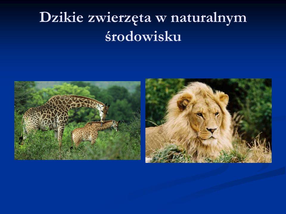 Dzikie zwierzęta w naturalnym środowisku