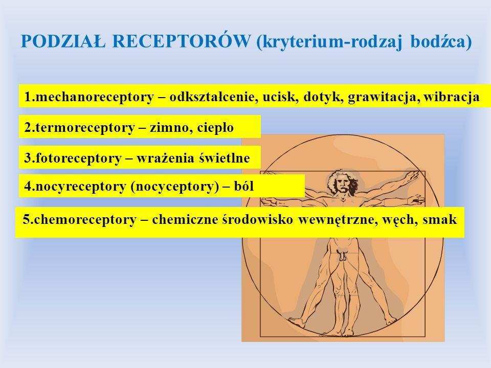 5.chemoreceptory – chemiczne środowisko wewnętrzne, węch, smak