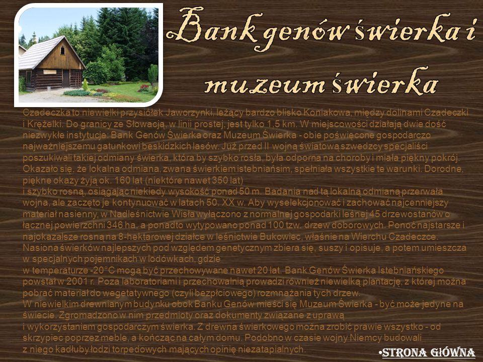 Bank genów świerka i muzeum świerka