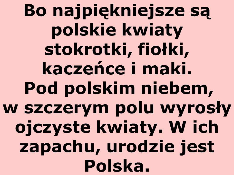 Bo najpiękniejsze są polskie kwiaty stokrotki, fiołki, kaczeńce i maki