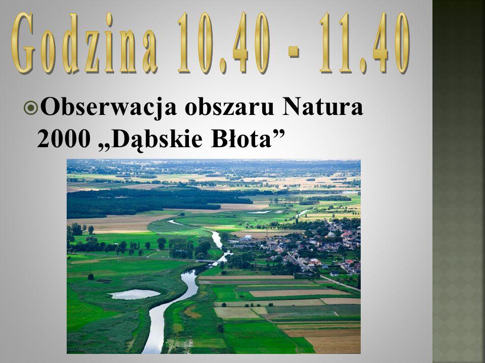 "Obserwacja obszaru Natura 2000 ""Dąbskie Błota"