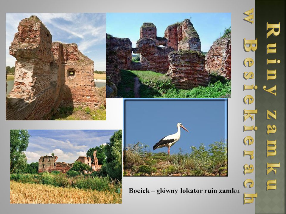 Bociek – główny lokator ruin zamku