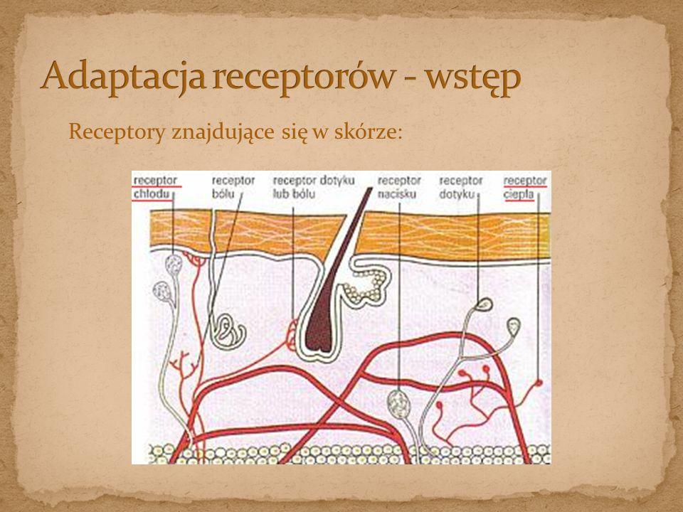 Adaptacja receptorów - wstęp