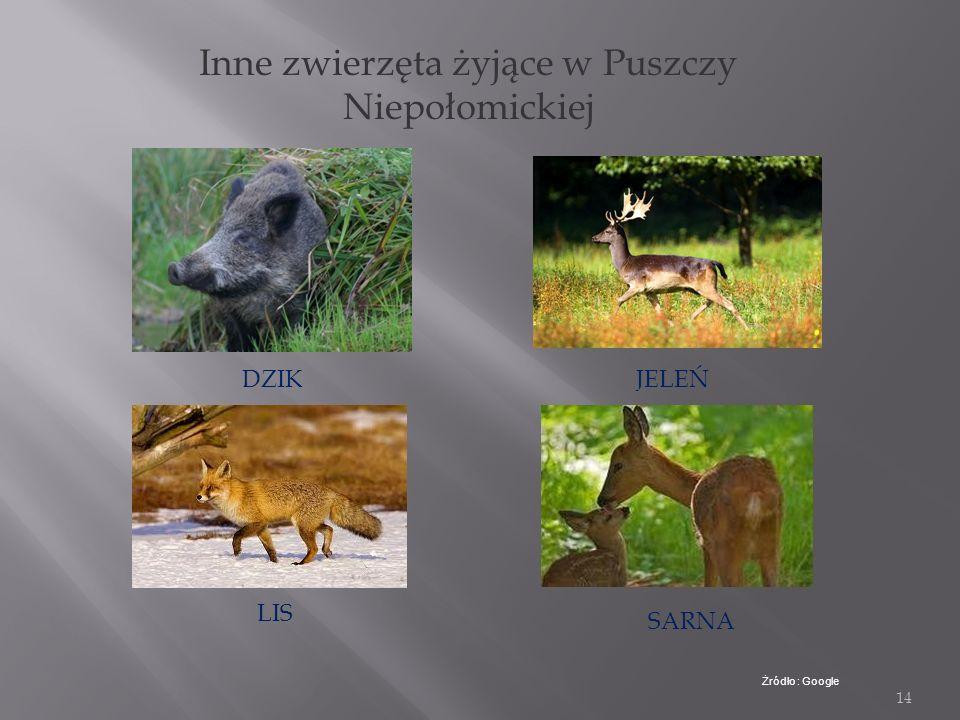 Inne zwierzęta żyjące w Puszczy Niepołomickiej