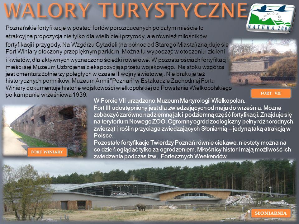 WALORY TURYSTYCZNE Poznańskie fortyfikacje w postaci fortów porozrzucanych po całym mieście to.