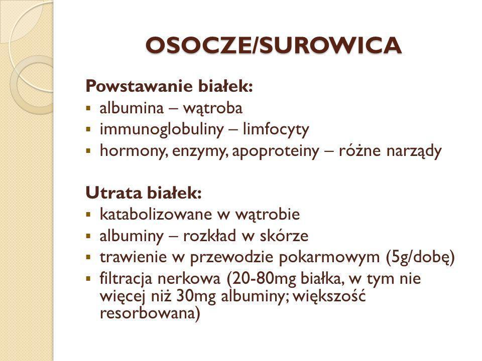 OSOCZE/SUROWICA Powstawanie białek: albumina – wątroba