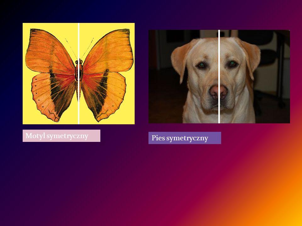 Motyl symetryczny Pies symetryczny