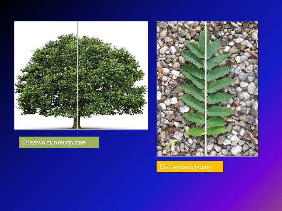 Drzewo symetryczne Liść symetryczny