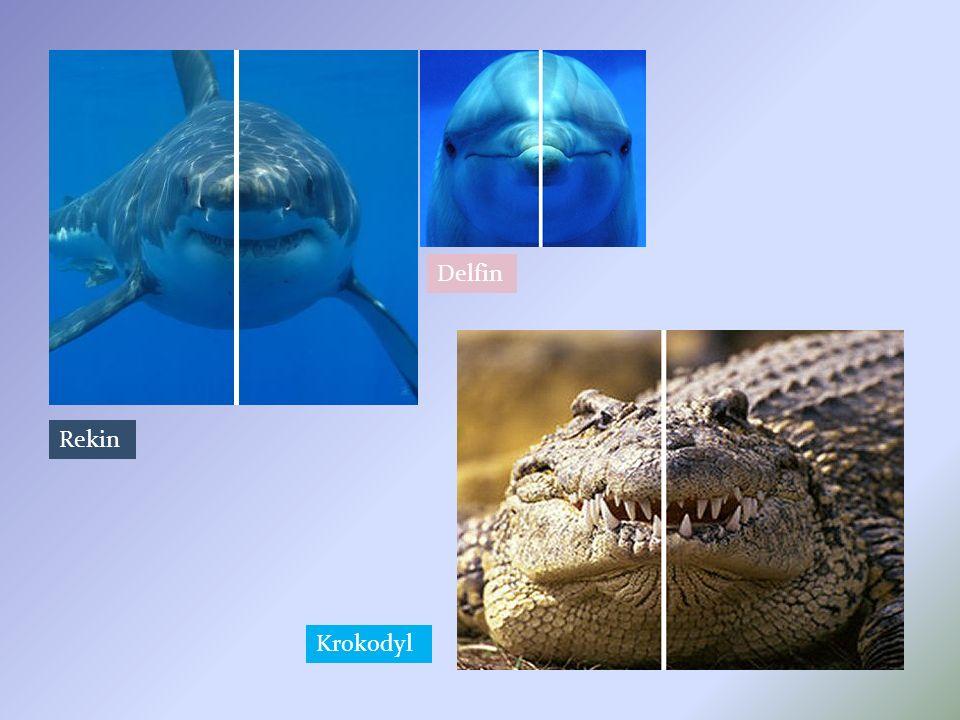 Delfin Rekin Krokodyl