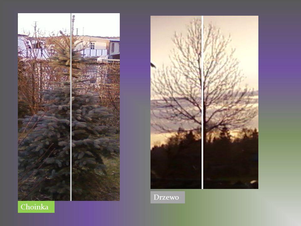Drzewo Choinka