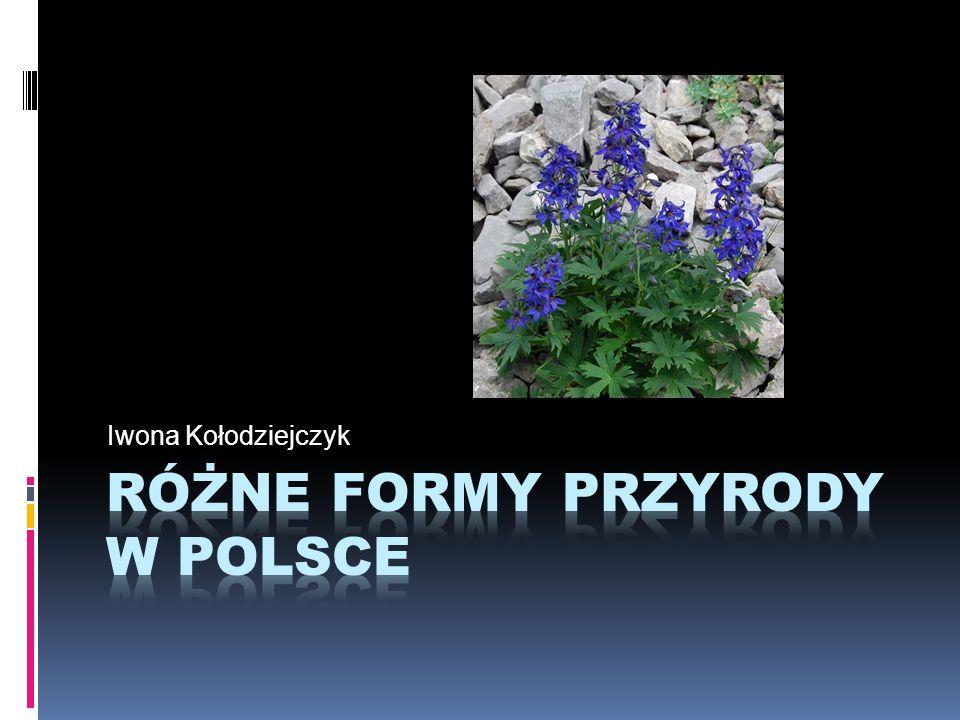 Różne formy przyrody w polsce