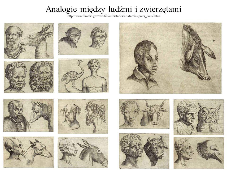 Analogie między ludźmi i zwierzętami http://www. nlm. nih