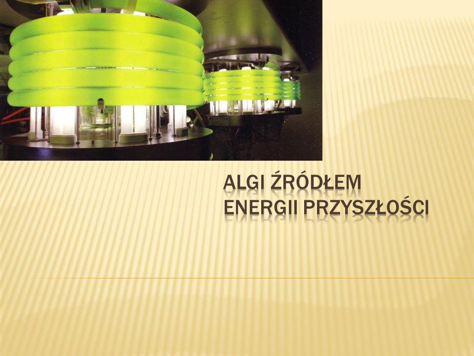 Algi źródłem energii przyszłości