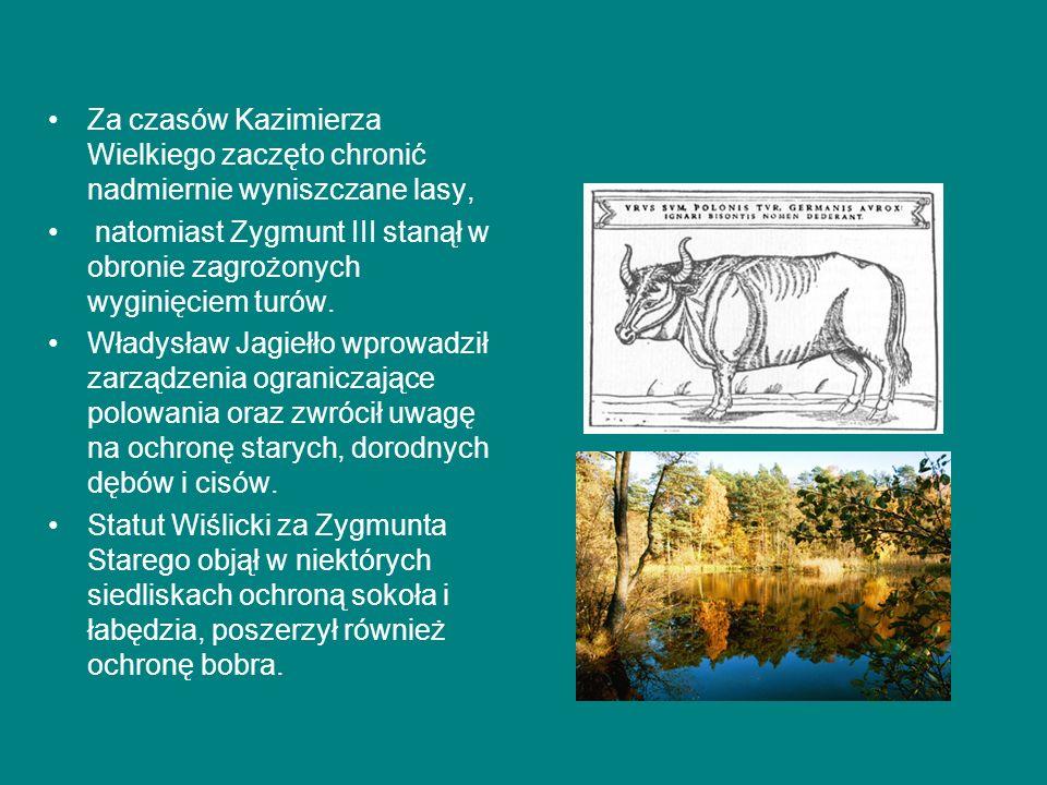 Za czasów Kazimierza Wielkiego zaczęto chronić nadmiernie wyniszczane lasy,