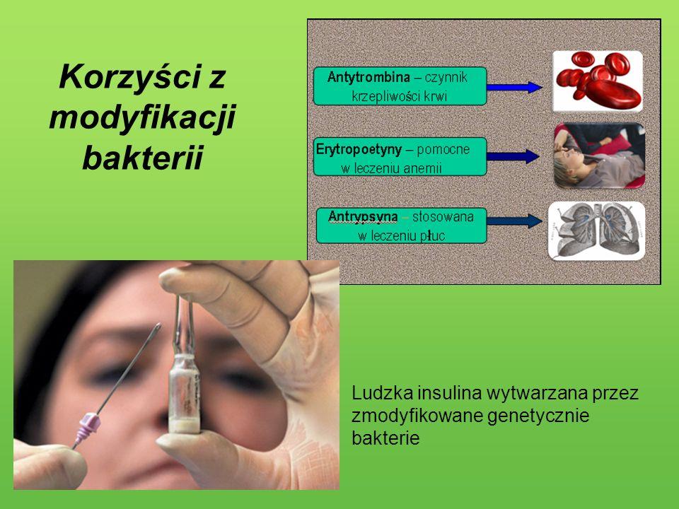 Korzyści z modyfikacji bakterii