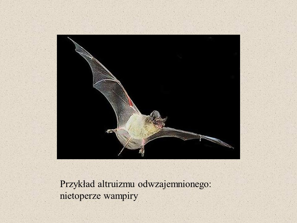 Przykład altruizmu odwzajemnionego: nietoperze wampiry