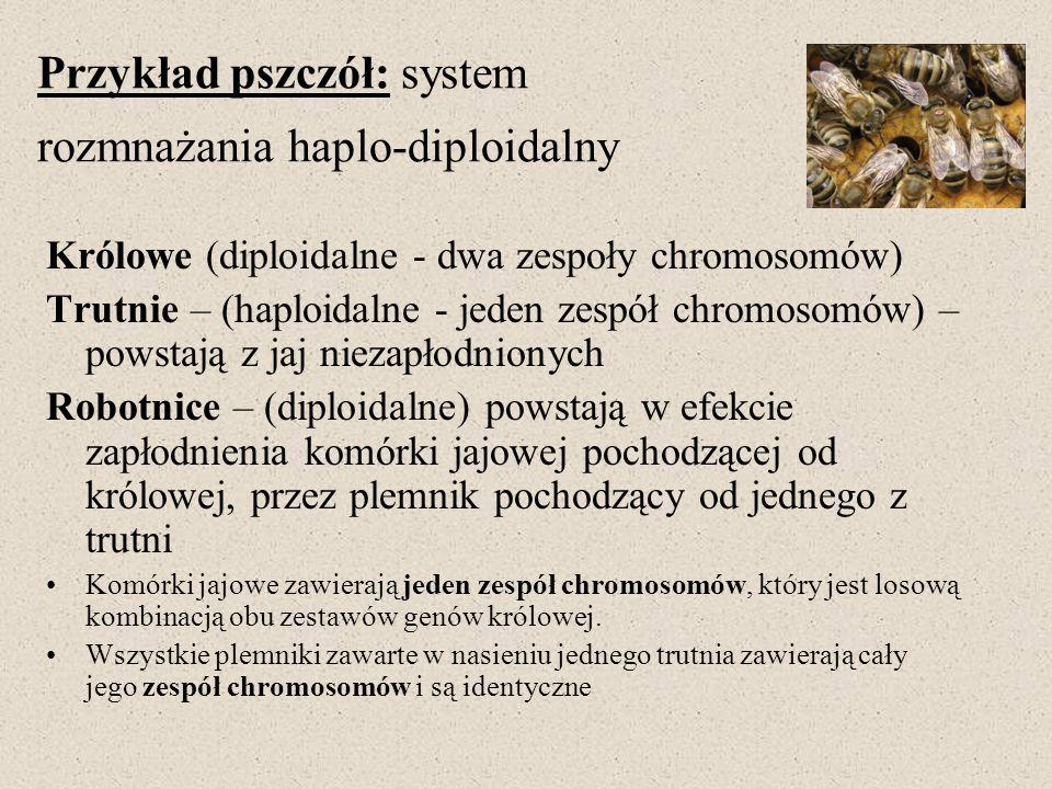 Przykład pszczół: system rozmnażania haplo-diploidalny