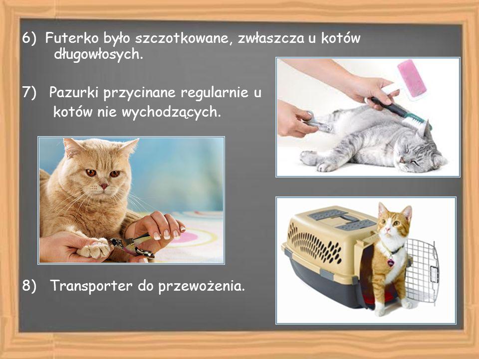 6) Futerko było szczotkowane, zwłaszcza u kotów długowłosych.