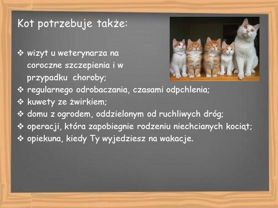 Kot potrzebuje także: wizyt u weterynarza na coroczne szczepienia i w