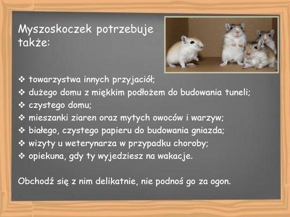 Myszoskoczek potrzebuje także: