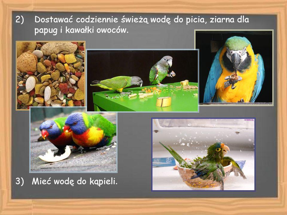 Dostawać codziennie świeżą wodę do picia, ziarna dla papug i kawałki owoców.