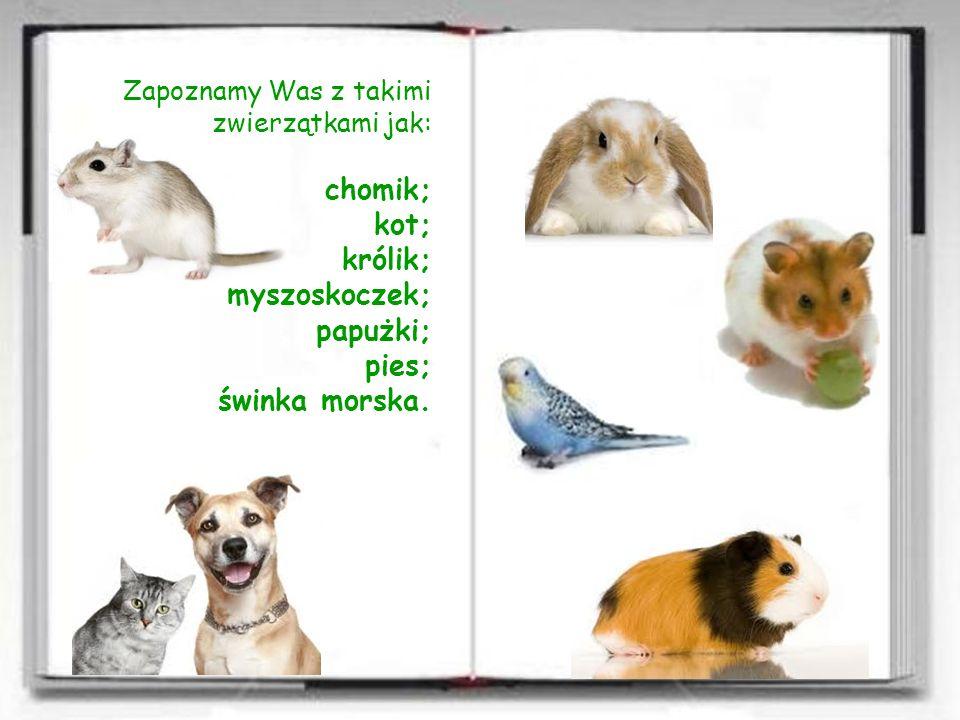 Zapoznamy Was z takimi zwierzątkami jak:. chomik;. kot;. królik;