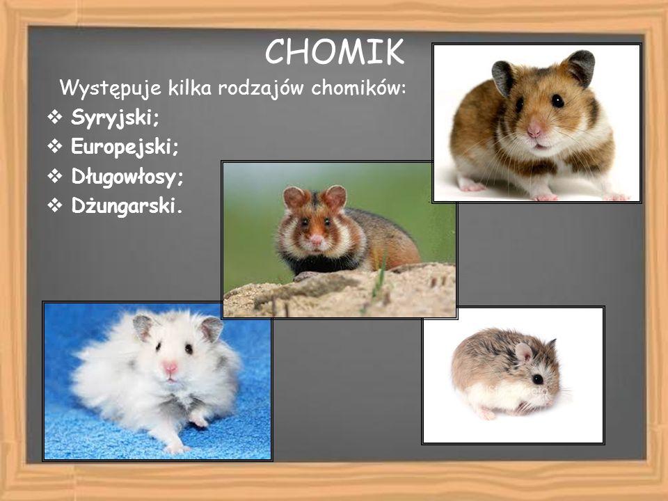 CHOMIK Występuje kilka rodzajów chomików: Syryjski; Europejski;
