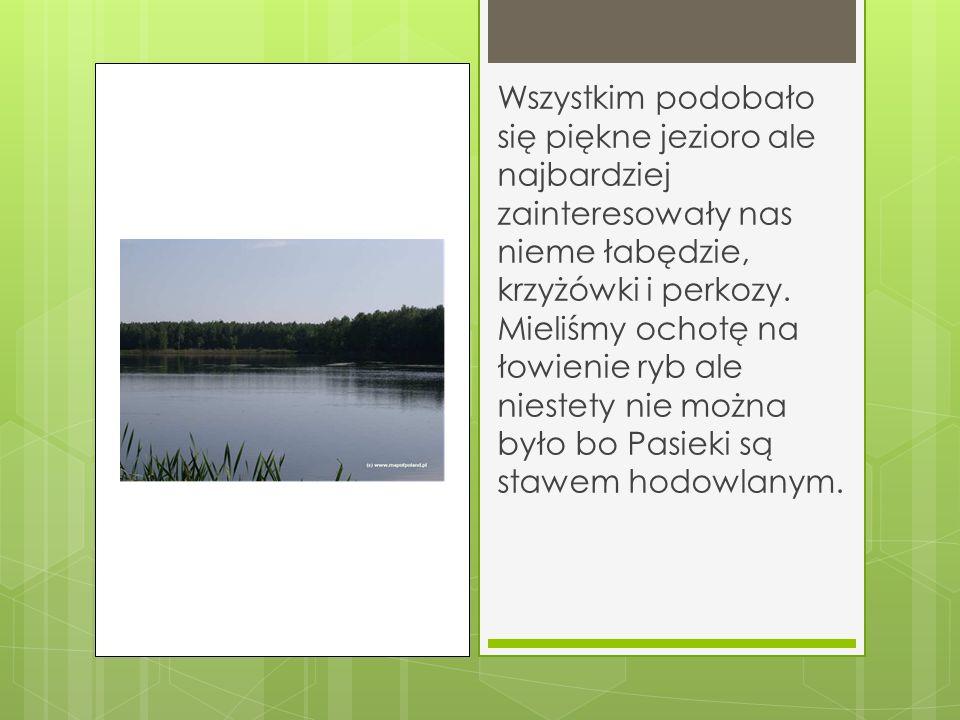 Wszystkim podobało się piękne jezioro ale najbardziej zainteresowały nas nieme łabędzie, krzyżówki i perkozy.