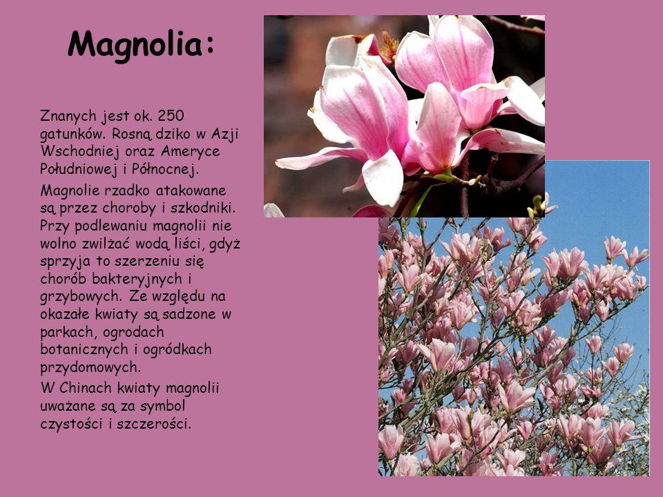 Magnolia:Znanych jest ok. 250 gatunków. Rosną dziko w Azji Wschodniej oraz Ameryce Południowej i Północnej.