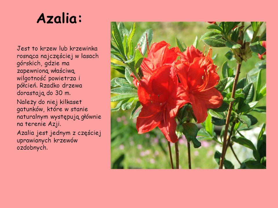 Azalia:
