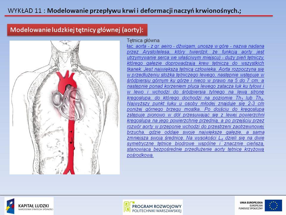 Modelowanie ludzkiej tętnicy głównej (aorty):