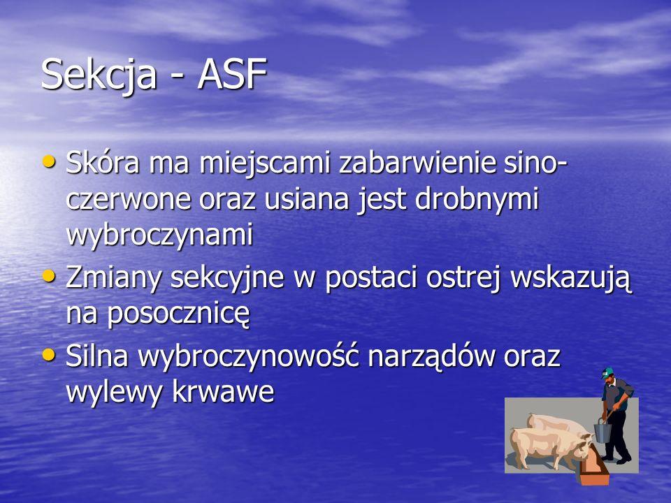 Sekcja - ASF Skóra ma miejscami zabarwienie sino-czerwone oraz usiana jest drobnymi wybroczynami.