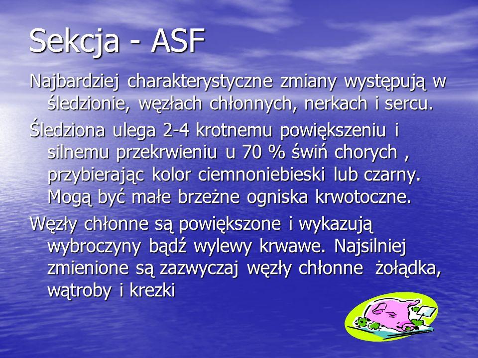 Sekcja - ASF Najbardziej charakterystyczne zmiany występują w śledzionie, węzłach chłonnych, nerkach i sercu.