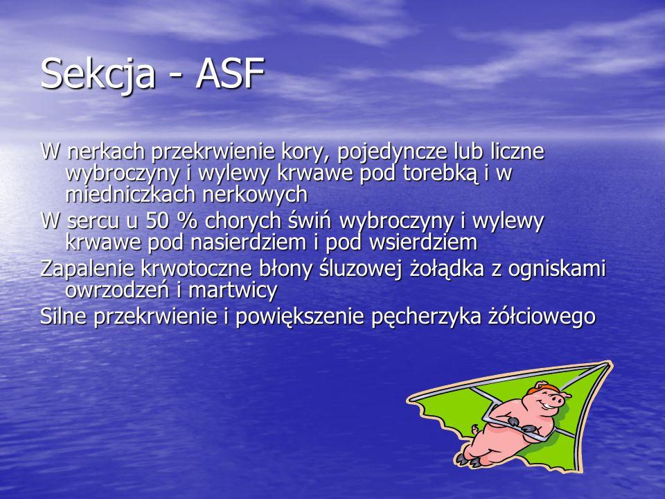 Sekcja - ASF W nerkach przekrwienie kory, pojedyncze lub liczne wybroczyny i wylewy krwawe pod torebką i w miedniczkach nerkowych.