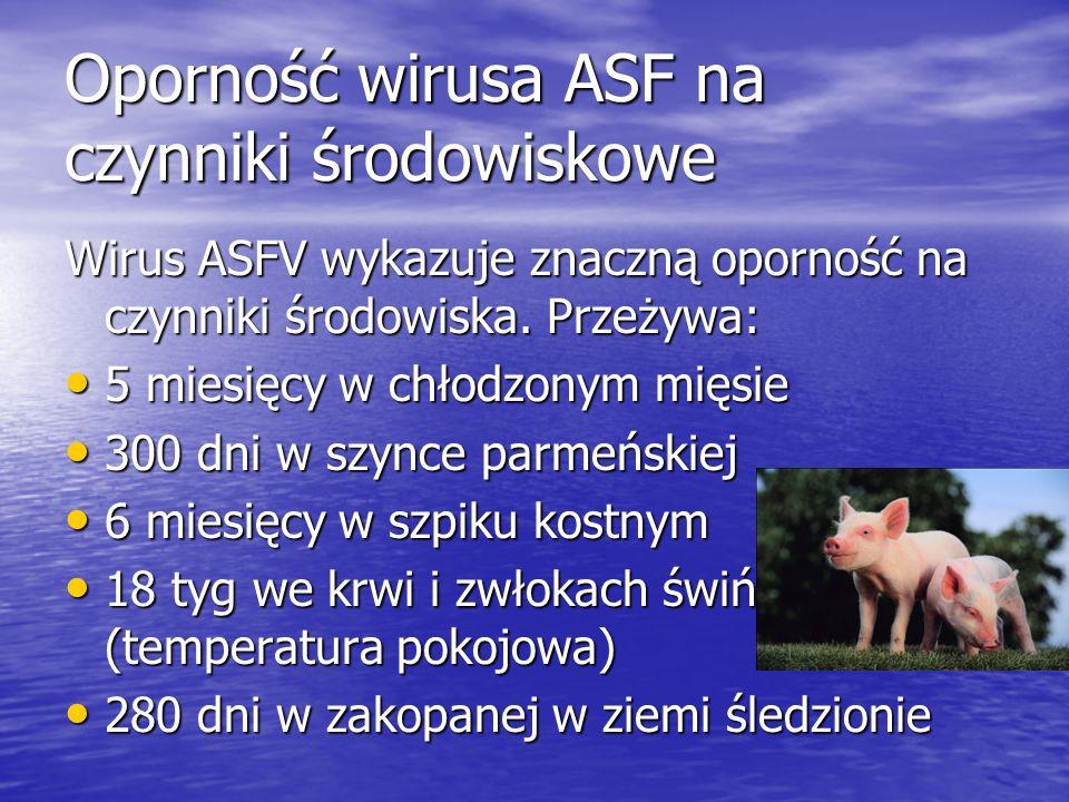 Oporność wirusa ASF na czynniki środowiskowe