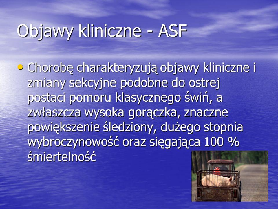 Objawy kliniczne - ASF