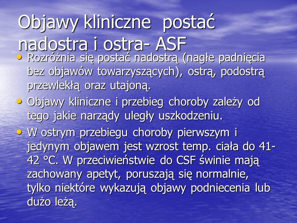 Objawy kliniczne postać nadostra i ostra- ASF