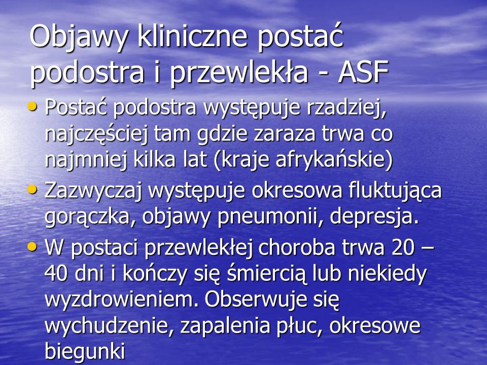 Objawy kliniczne postać podostra i przewlekła - ASF