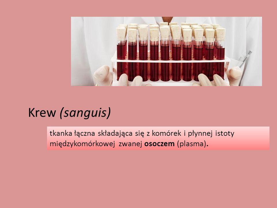 Krew (sanguis) tkanka łączna składająca się z komórek i płynnej istoty międzykomórkowej zwanej osoczem (plasma).