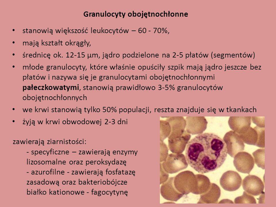 Granulocyty obojętnochłonne