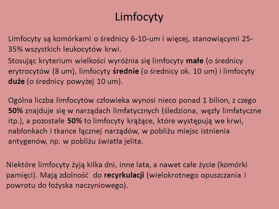 Limfocyty Limfocyty są komórkami o średnicy 6-10-um i więcej, stanowiącymi 25-35% wszystkich leukocytów krwi.